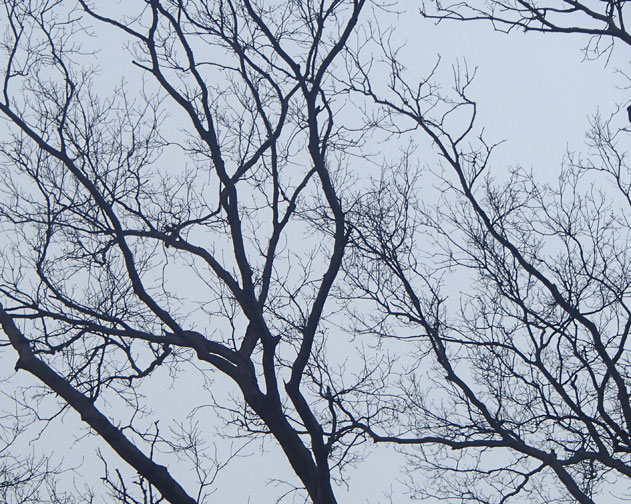 branches4