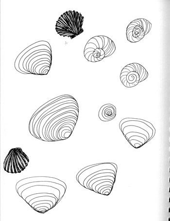 shells-2