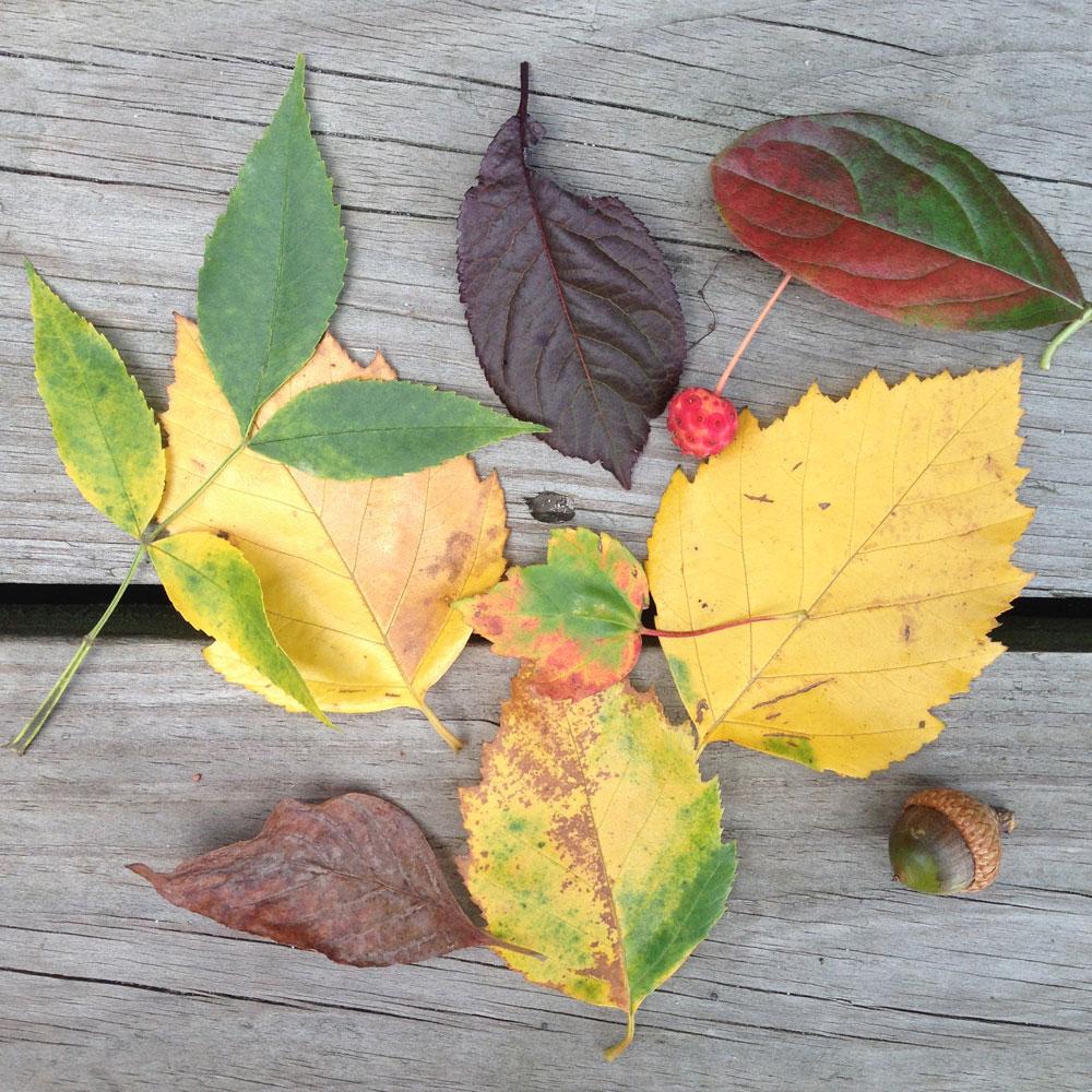leavesonwood