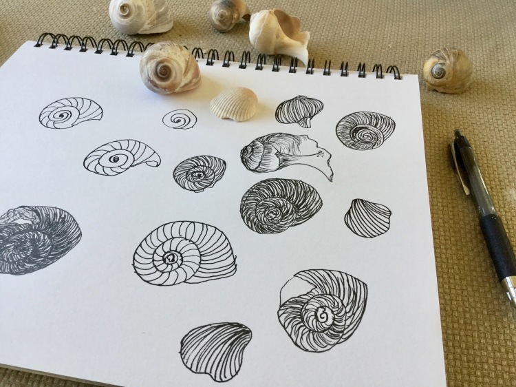 Back to daily creative habits. Shells in the sketchbook.