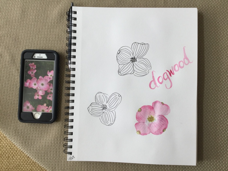 Dogwood flower, daily sketchbook