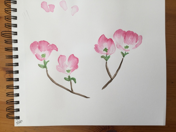 Dogwood flowers in my sketchbook