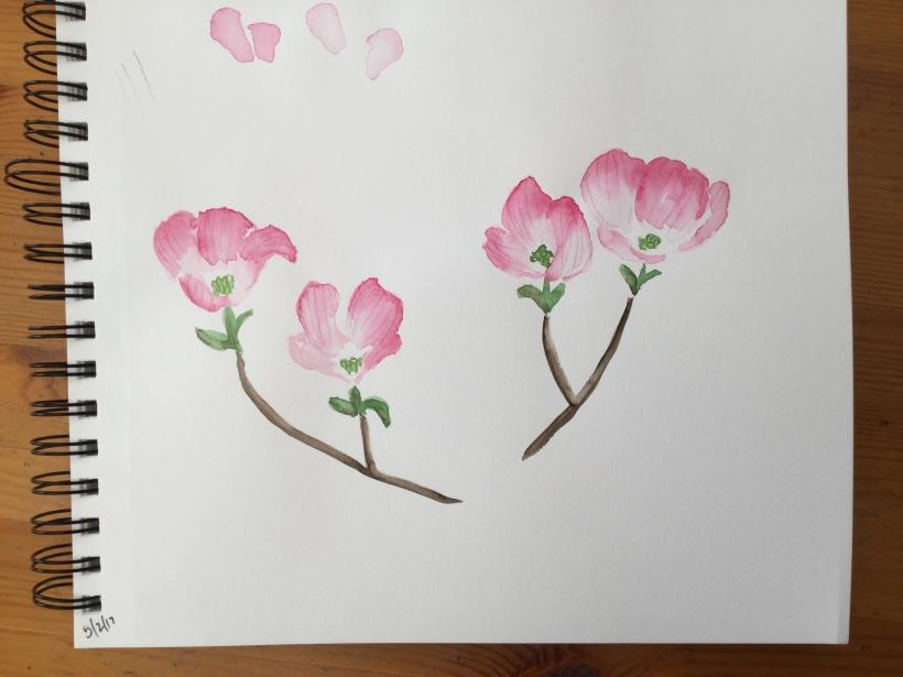 Dogwood flowers in my sketchbook