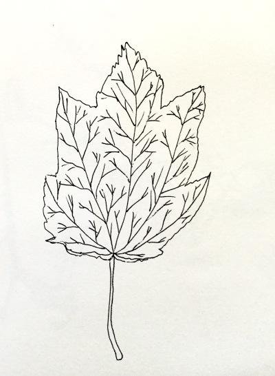 InkTober leaf