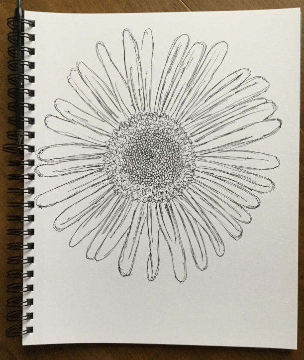 InkTober sketch of Montauk Daisies